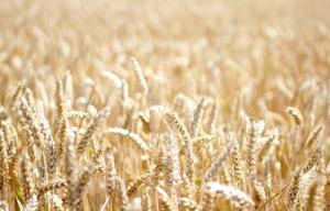 freephoto_harvest_300px